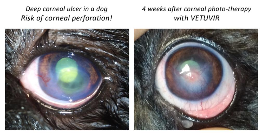 ulcera corneale profonda